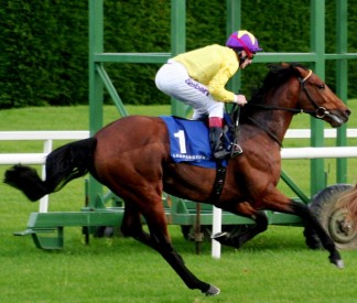 Both colts pull up with Born To Sea maybe lame-Photo Tony St Ledger-Pattern Racing