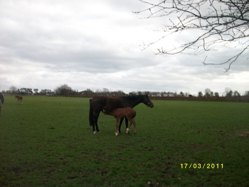 Mare and Foal at The Irish National Stud- Pattern Racing