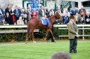 Nephrite enters the parade ring-Photo Tony St Ledger-Pattern Racing