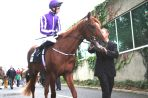 Australia leaving the paddock prior to winning the Breeder's Cup Juvenile Turf Trial Stakes At Leopardstown