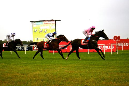 Trading Leather running third to The Fugue and Al Kazeem in the 2013 Irish Champion Stakes