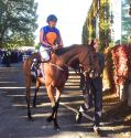 Found leaves the ring at Leopardstown