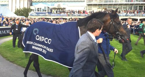 Golden Horn after winning at Leopardstown