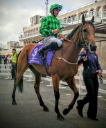 Custom Cut leaves the ring for the Ballyroan Stakes