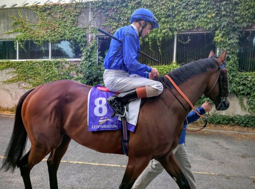 Tribal Beat on his way out to win the Ballyroan