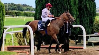 3rd Al Shaqab Racing Qemah on her way in after the Coolmore Matron Stakes